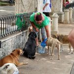 A woman in a green shirt bending over to pour water in a dish for 5 dogs