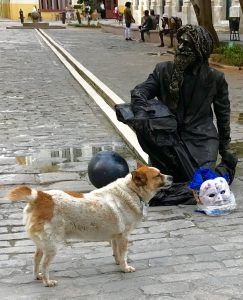 A man painted head to toe to look like a statue. A stray dog stands in front of him.