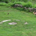 A women crouches on the grass near an iguana, with a stone wall in the background