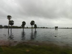 Trees stand in a field flooded with water